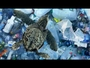 VIDEO : Deep In The Heart Of The Mariana Trench...Is A Plastic Bag