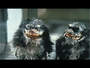VIDEO : Critters TV Show Ordered To Series